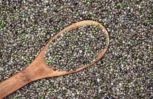 Quali sono i benefici dei semi di canapa